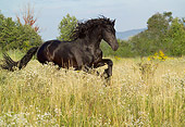 HOR 01 MB0140 01