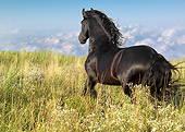 HOR 01 MB0144 01