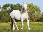 HOR 01 MB0145 01