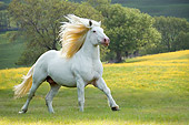 HOR 01 MB0146 01