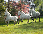 HOR 01 MB0151 01