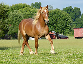 HOR 01 MB0158 01