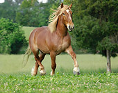 HOR 01 MB0159 01