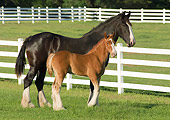 HOR 01 MB0160 01