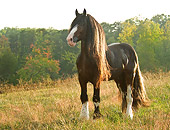 HOR 01 MB0161 01
