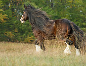 HOR 01 MB0163 01