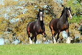 HOR 01 MB0169 01