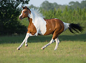 HOR 01 MB0170 01