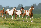 HOR 01 MB0173 01