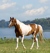HOR 01 MB0174 01