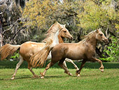 HOR 01 MB0177 01