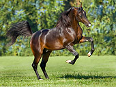 HOR 01 MB0178 01