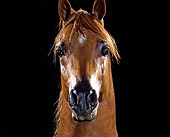 HOR 01 MB0181 01