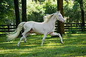 HOR 01 MB0185 01