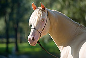 HOR 01 MB0187 01