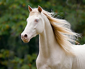 HOR 01 MB0188 01