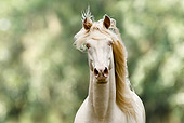 HOR 01 MB0189 01