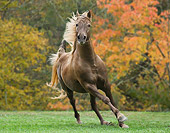 HOR 01 MB0193 01