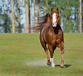HOR 01 MB0198 01