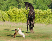 HOR 01 MB0202 01