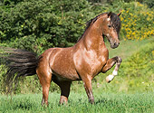 HOR 01 MB0203 01