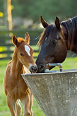 HOR 01 MB0211 01