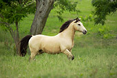 HOR 01 MB0216 01