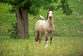 HOR 01 MB0218 01