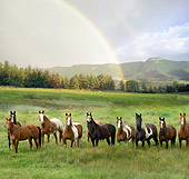 HOR 01 MB0223 01