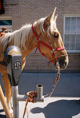 HOR 01 MR0016 01