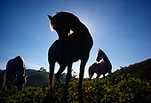 HOR 01 RC0001 01