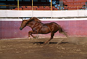 HOR 01 RK0035 30