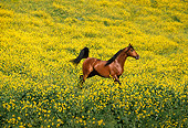 HOR 01 RK0050 09