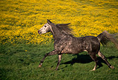 HOR 01 RK0060 04