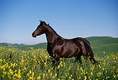 HOR 01 RK0068 04