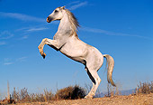 HOR 01 RK0081 16