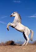 HOR 01 RK0089 65