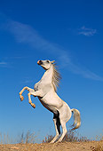 HOR 01 RK0089 68