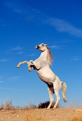 HOR 01 RK0089 88