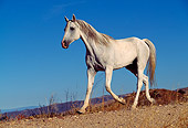 HOR 01 RK0093 01