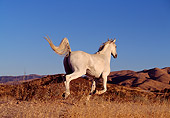 HOR 01 RK0103 01