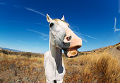 HOR 01 RK0106 23