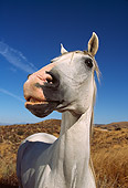 HOR 01 RK0107 04
