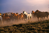 HOR 01 RK0132 04