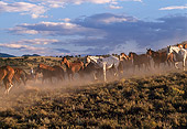HOR 01 RK0132 05