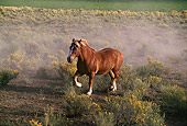 HOR 01 RK0165 02