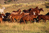HOR 01 RK0170 10