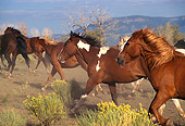 HOR 01 RK0250 01
