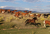 HOR 01 RK0265 01