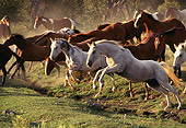 HOR 01 RK0305 01